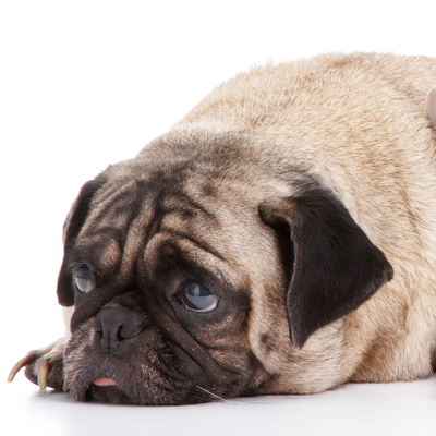 Sahara Pines Animal Hospital Las Vegas, NV Dog surgical FAQ