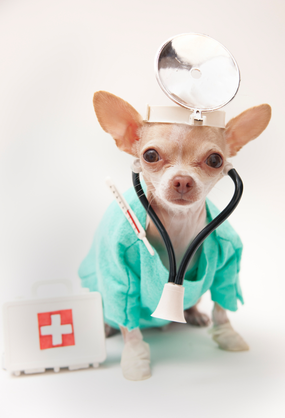 Sahara Pines Animal Hospital - Las Vegas, NV - Dr Chihuahua on home page